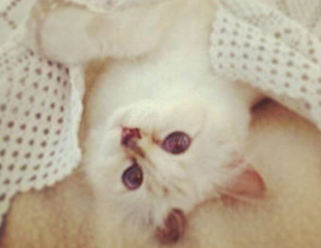 <p>25 April 2014</p><p>睡前也要自拍,&quot;Sweet dreams my dahhhlings!&quot;,#choupette。</p>